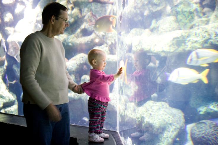 Aquarium004