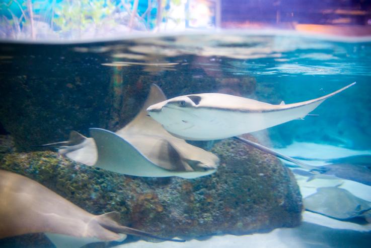 Aquarium005