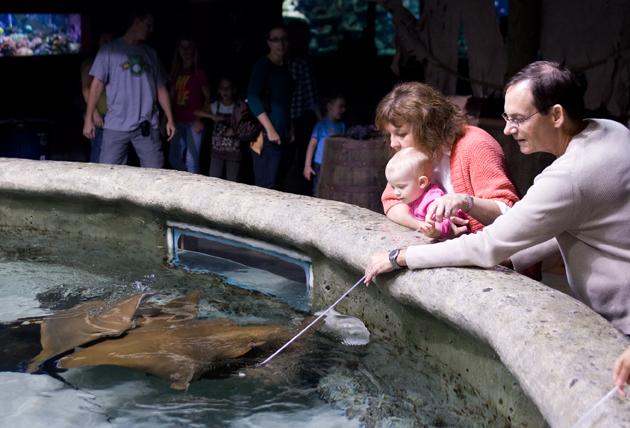 Aquarium008